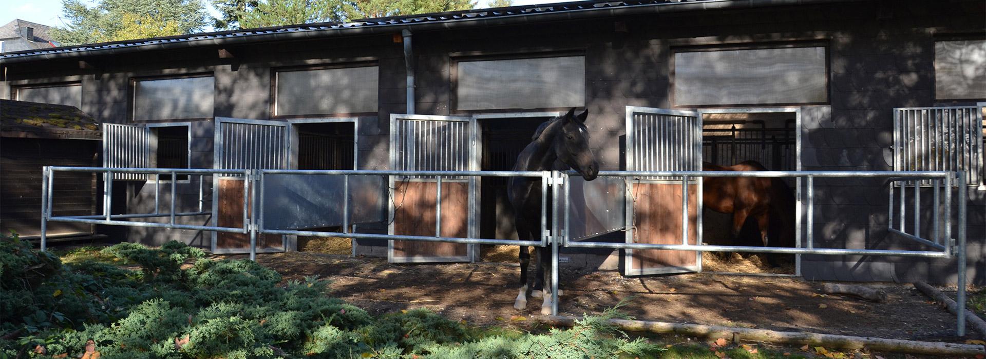 Pferdepension-Maria-Schacht-Leienkaul